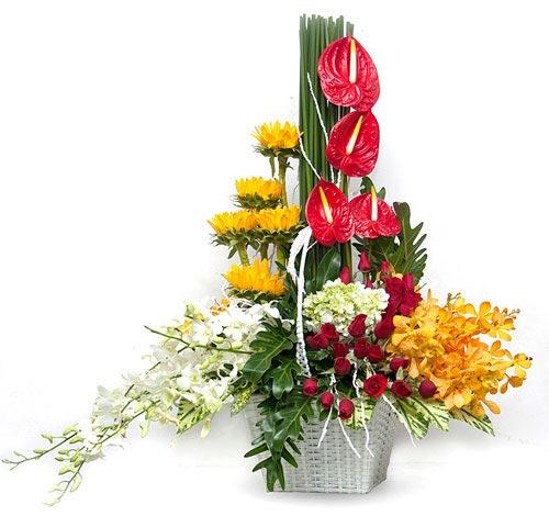 Điện hoa tươi và Quà tặng - Vững chãi