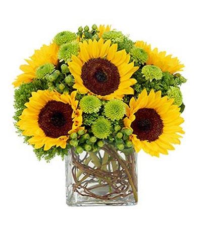 Điện hoa tươi và Quà tặng - Mặt trời bé con