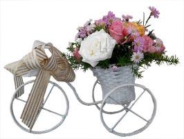Xe đạp ơi 2